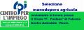 SELEZIONE  MANODOPERA  AGRICOLA
